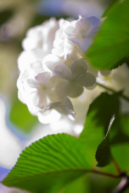 5.16:白い花R1.jpg