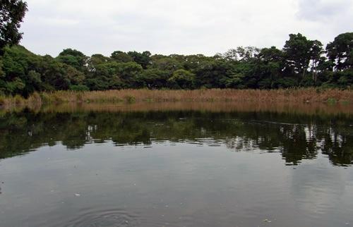 大瀬崎の神池