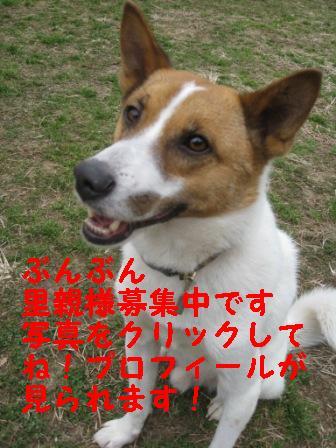 コピー ~ IMG_0676.JPG