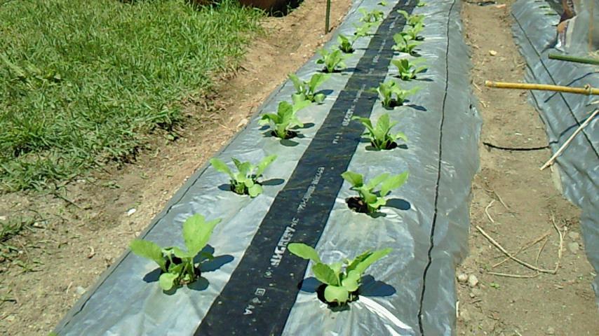 家庭菜園10
