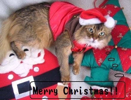 クリスマスMissy嬢