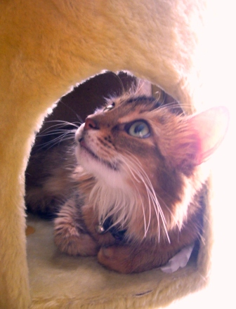 Missy_cat tower
