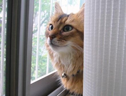 裏庭を眺めるMissy嬢