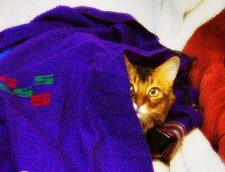 毛布の下に隠れて2