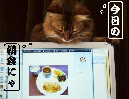 朝食チェック中のMissy嬢