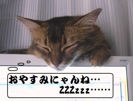 Missy嬢PCの上で熟睡中