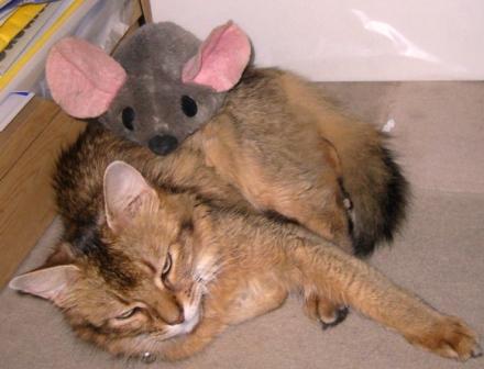 ネズミに襲われるMissy嬢