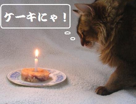 ケーキを見つめるMissy嬢