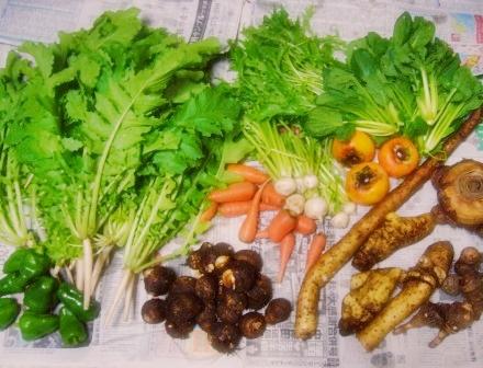 戴き物の野菜