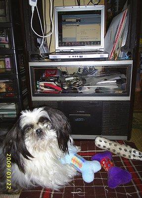 おもちゃでパソコンをバリケード封鎖しているジャッキー