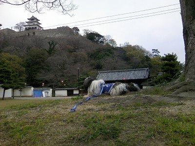 丸亀城にて2