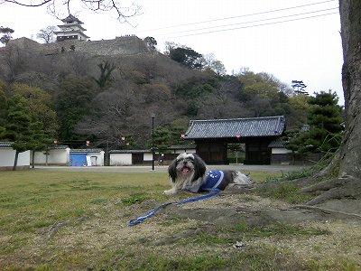丸亀城にて4