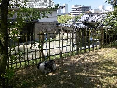 丸亀城大手門枡形で佇むジャッキー 2
