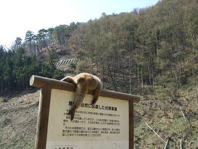 地獄谷のお猿