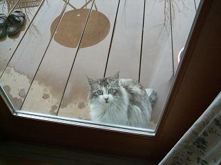 庭に来た猫3