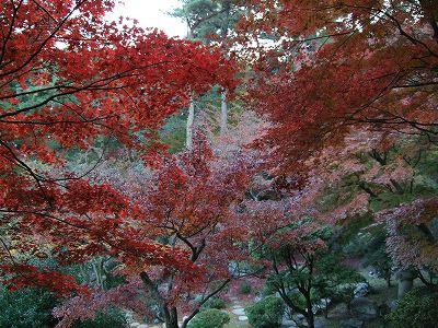 徳明館の紅葉