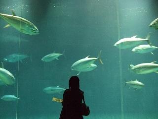 葛西臨海公園(水族館)
