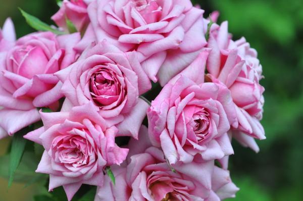 ベラドンナ夏の花.jpg