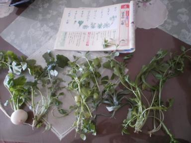 春の七草 2011