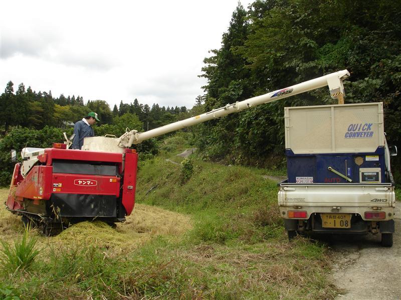 脱穀した米はトラックへ