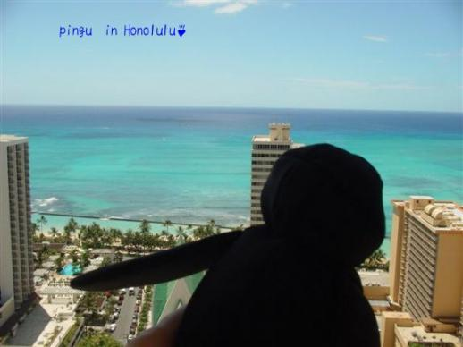 pingu in Honolulu