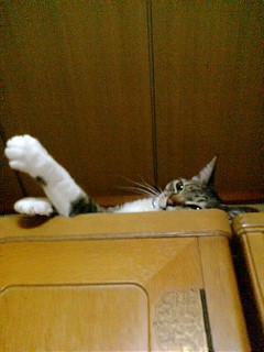 タンスの上のネコ