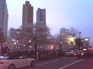 桜・2011年4月10日