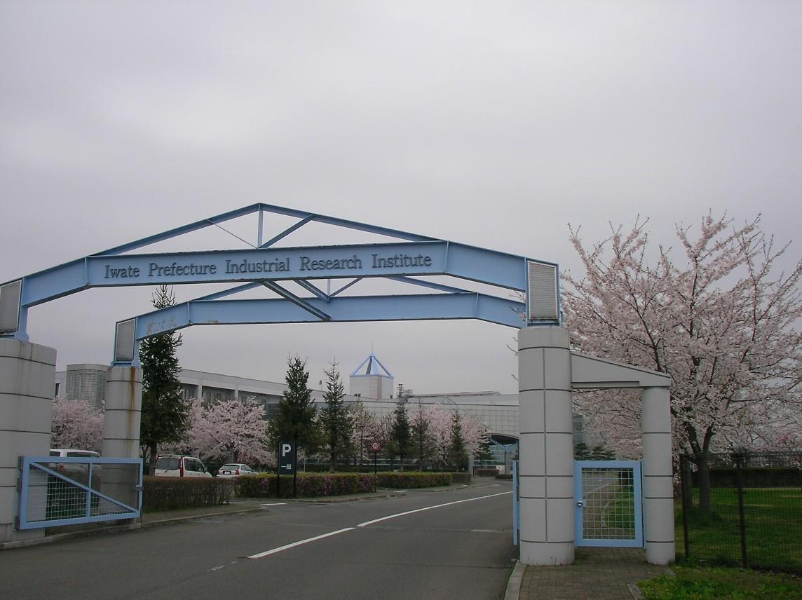 Sakura 6234.JPG