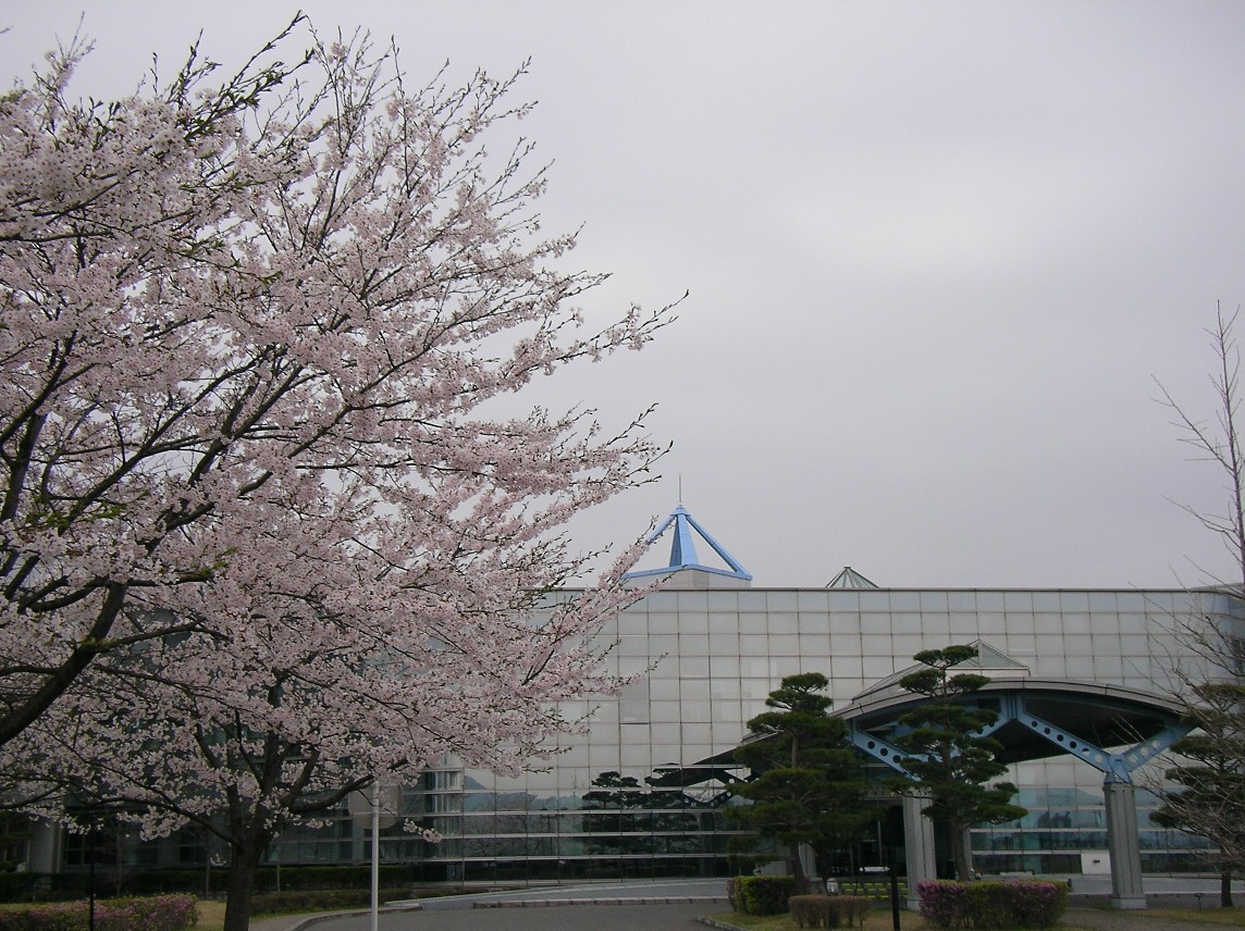 Sakura 6236.JPG
