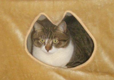 我家の猫窓から