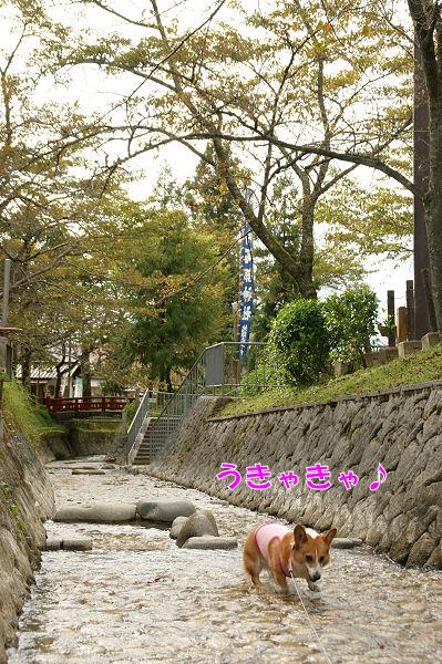 秋のお出掛け-5.JPG