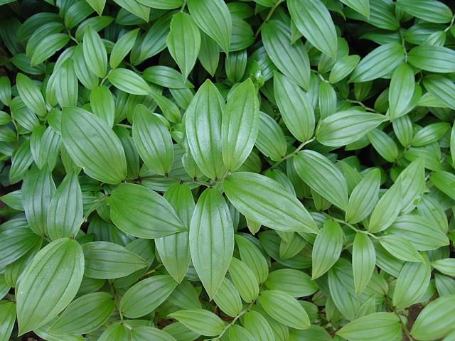 20090508植物11