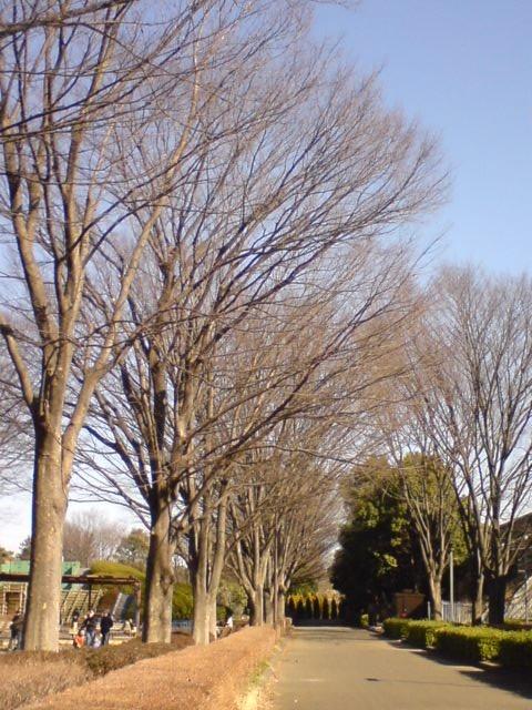 小金井公園-8