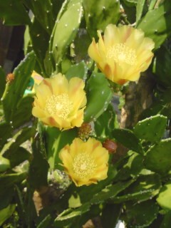 サボテンのお花-2