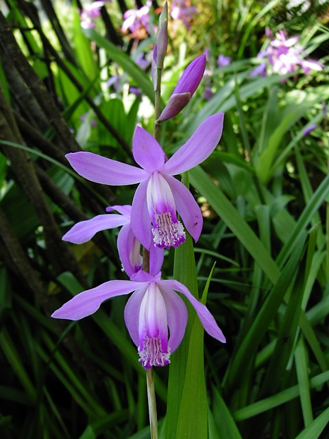 20090508植物09