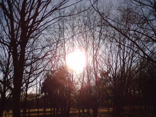 小金井公園-夕陽-1