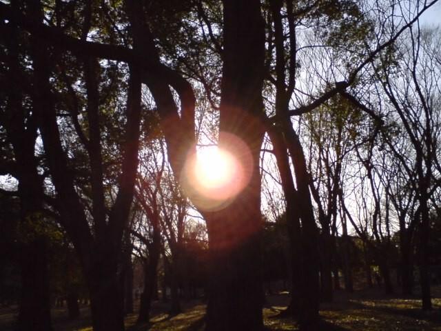小金井公園-夕陽-2