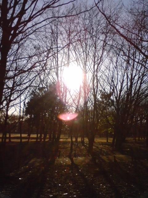 小金井公園-夕陽-3