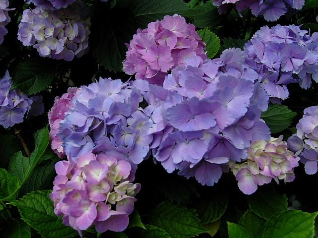 20100619植物07