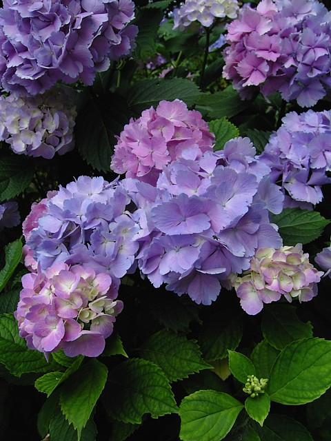 20100619植物09