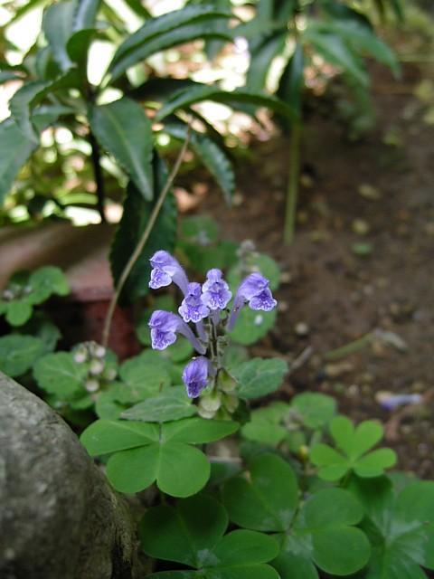 20090508植物07