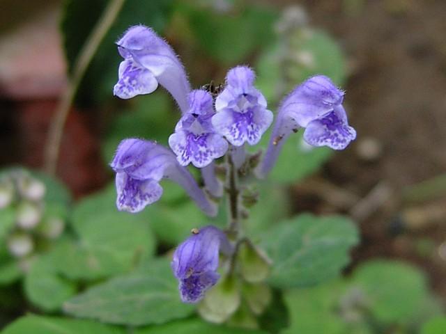 20090508植物08