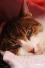 愛猫りっく