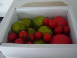 グリーンの縞模様のトマトです。爽やかで美味しいです。