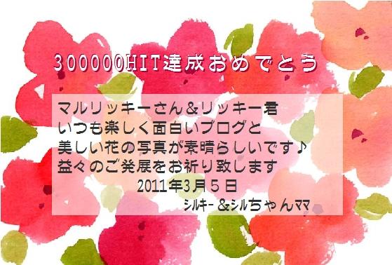300Khit_シルちゃんママさん