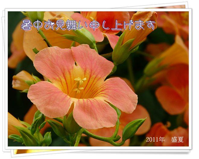 2011暑中お見舞い_Keikoさん