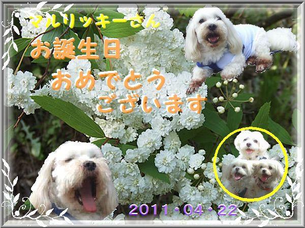2011バースデーカード_ekubo19さん