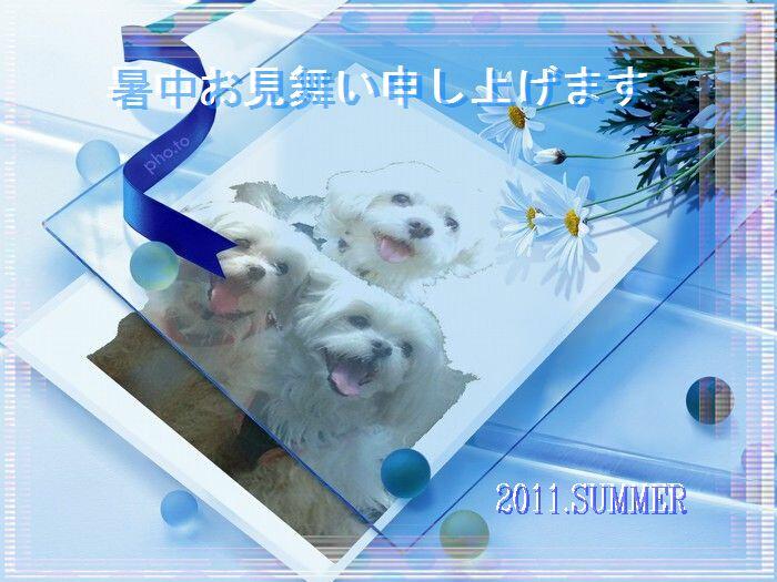 2011暑中見舞い_ekubo19さん