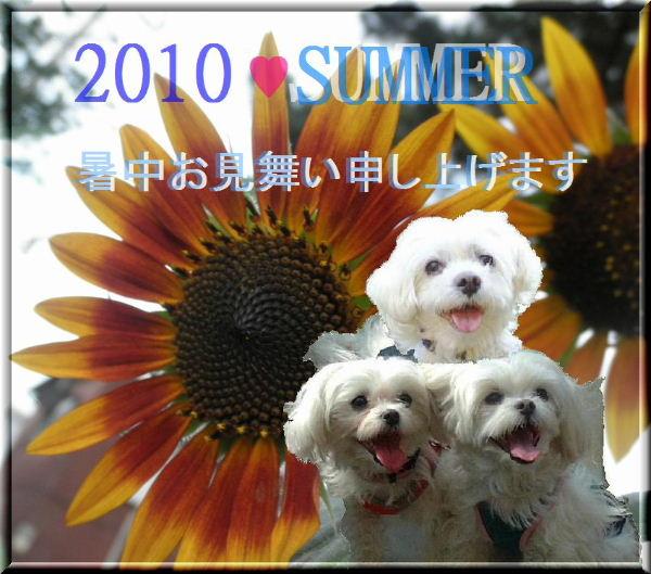 2010暑中見舞いekubo19さん
