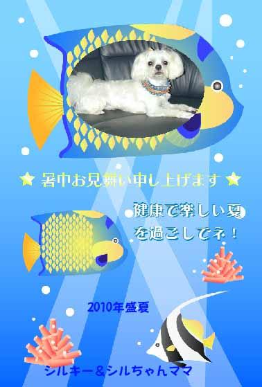 2010暑中見舞いシルちゃんママさん